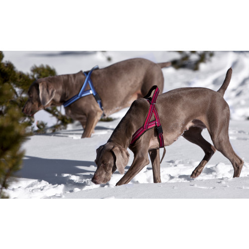 KENNEL EQUIP Dog T Harness Active