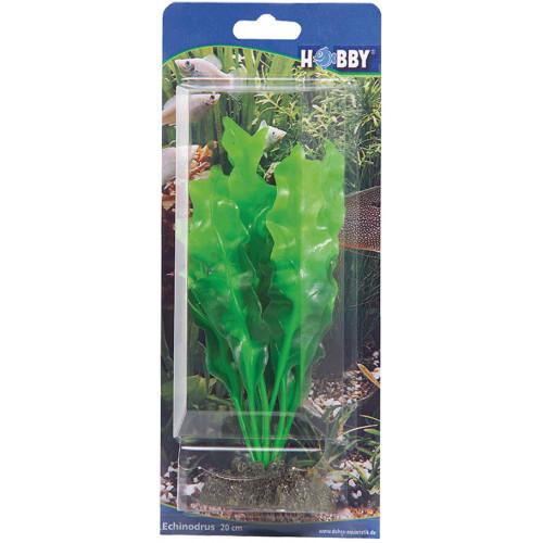 HOBBY Echinodrus