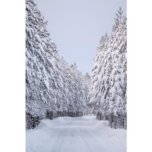 Poster Vinterväg