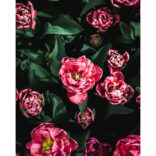 Poster Keukenhof Tulips