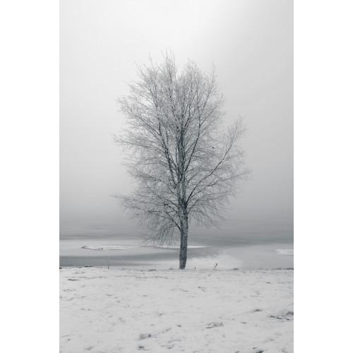 Poster Träd #2