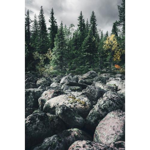 Poster Stenar och skog