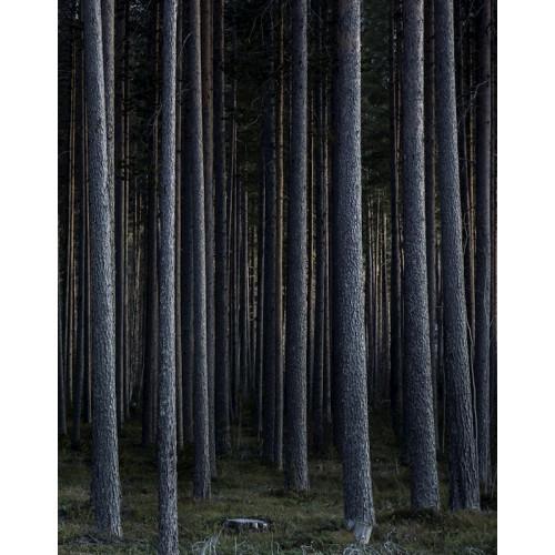 Poster Trädstammar