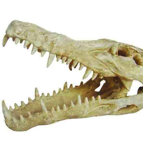 DOGMAN Dekor Gapande Krokodilkranium