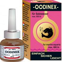 SEAHORSE Oodinex