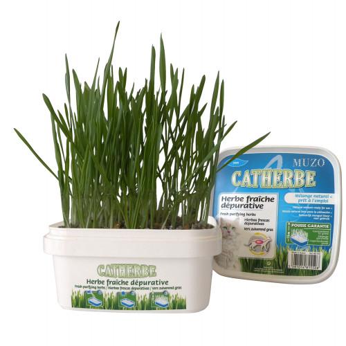 Muzo Kattgräs i låda Muzo 220 g